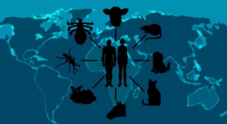 O que são zoonoses? Como a praia se torna perigosa na transmissão destas doenças?